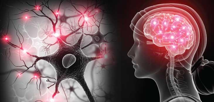 How Lupus Occurs In The Brain